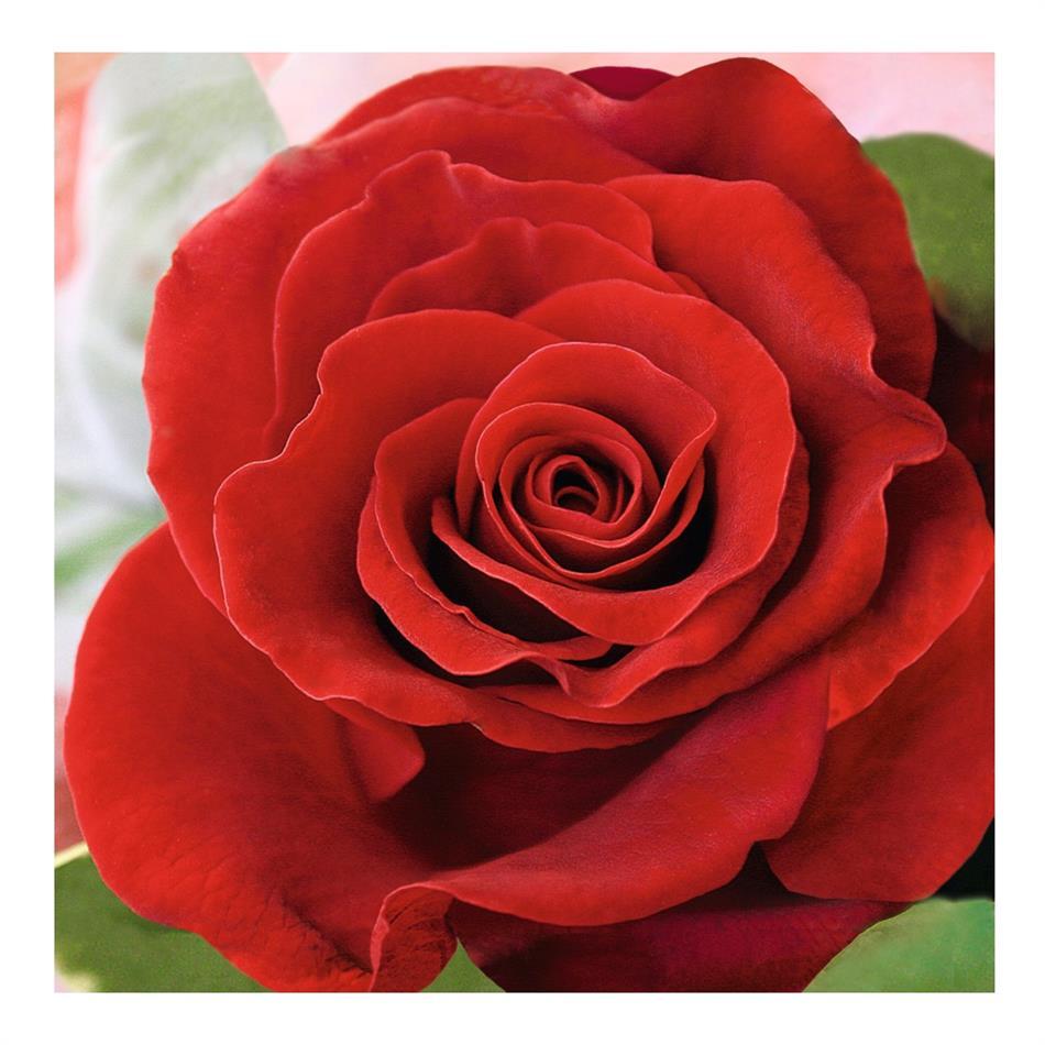 Salvrätik 33x33/20 Red Rose