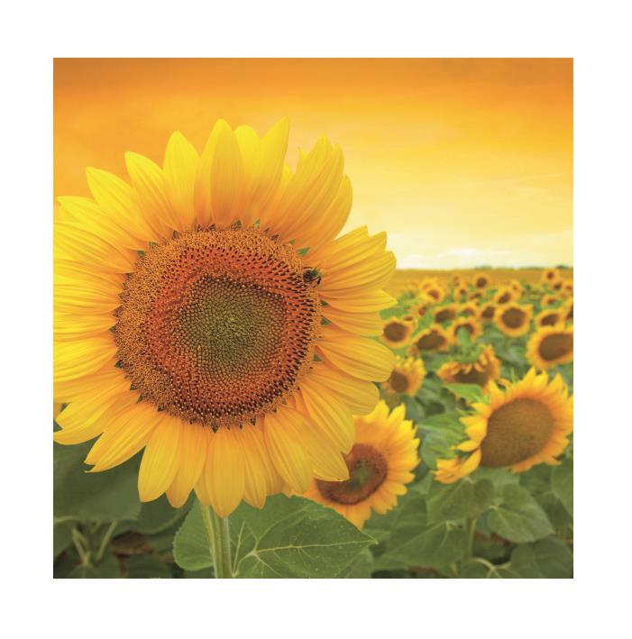 Salvrätik 33x33/20 Sunshine